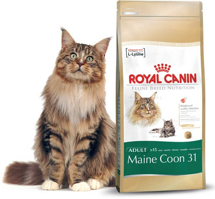 croquette pour chat de race maine coon de royal canin. Black Bedroom Furniture Sets. Home Design Ideas