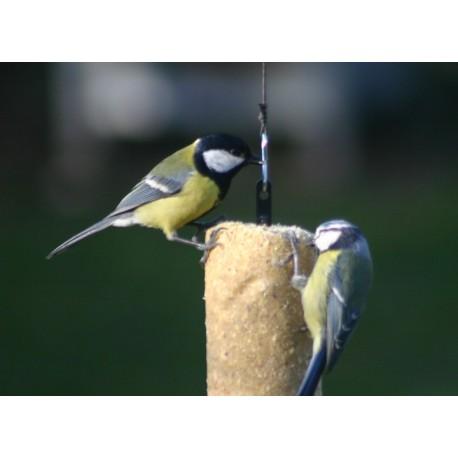 cylindre de graisse pr t l 39 emploi pour oiseaux de la. Black Bedroom Furniture Sets. Home Design Ideas