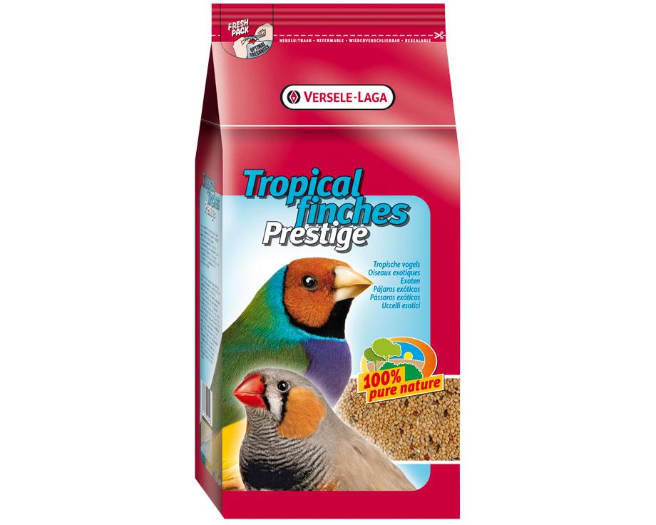 aliment graines oiseaux exotiques bec droit tropical. Black Bedroom Furniture Sets. Home Design Ideas